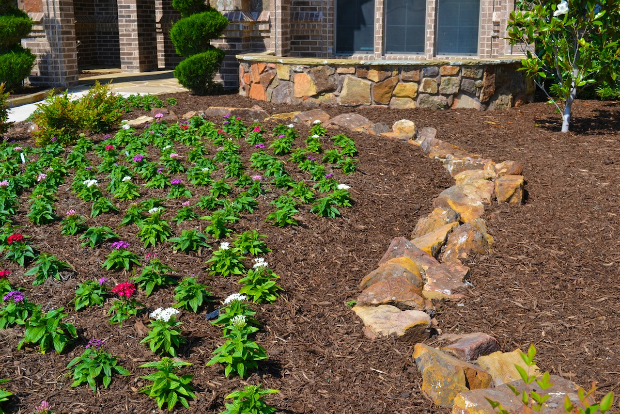 Gallery lone star lawn landscape for Lawn and landscape